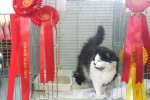 Best in Show Non-Pedigree Pet - Misty